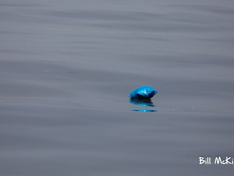 shiny Mylar balloons last for years in the ocean