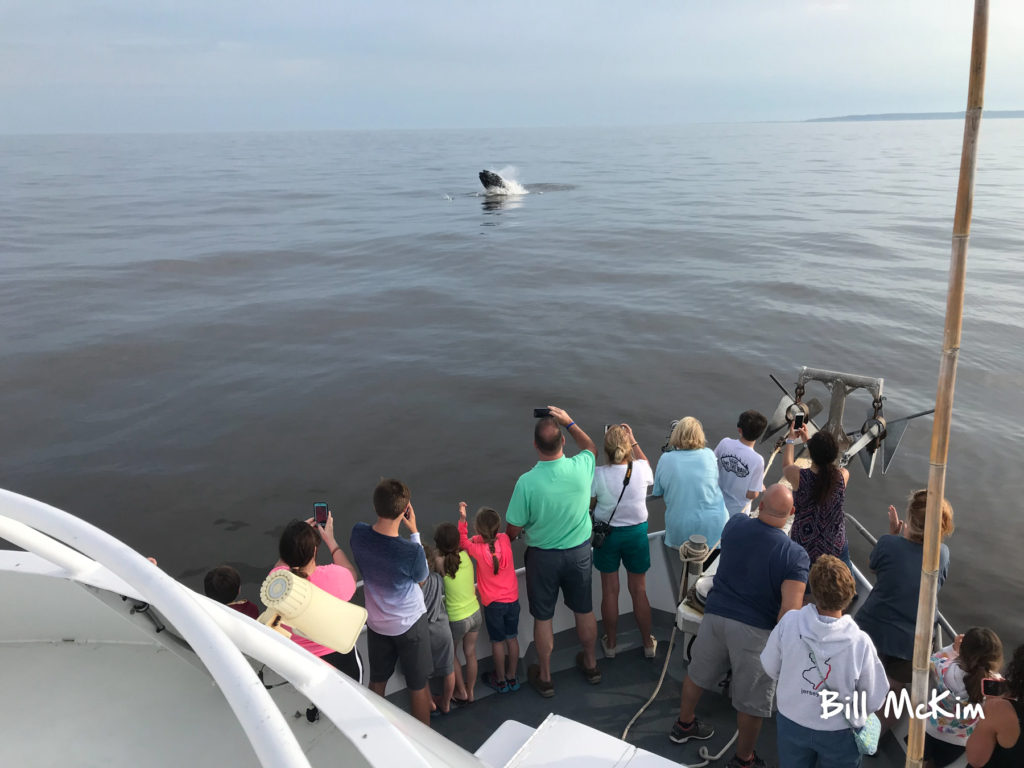 jersey shore whale watch, Jersey  Whale Watch Tour  Tickets 2021, Jersey Shore Whale Watch Tour 2020 Season