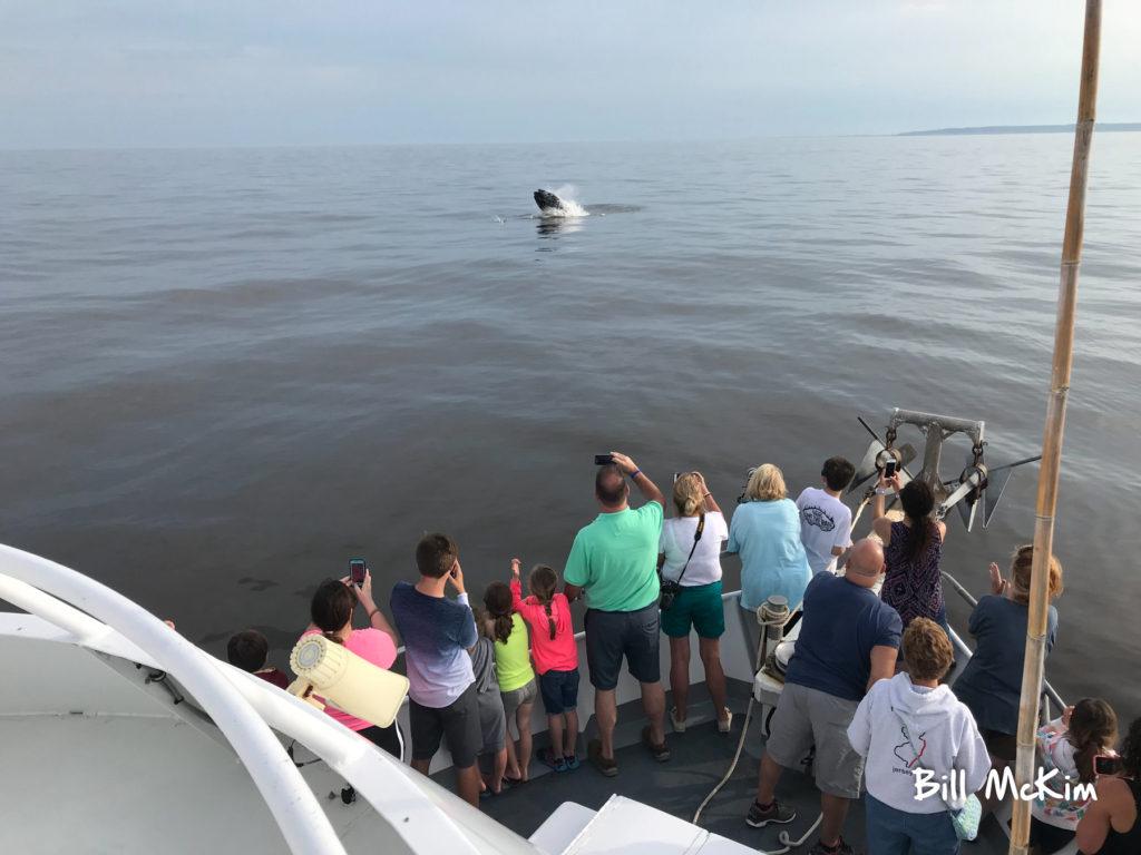 jersey shore whale watch, Jersey  Whale Watch Tour  Tickets 2021, Jersey Shore Whale Watch Tour 2021 Season