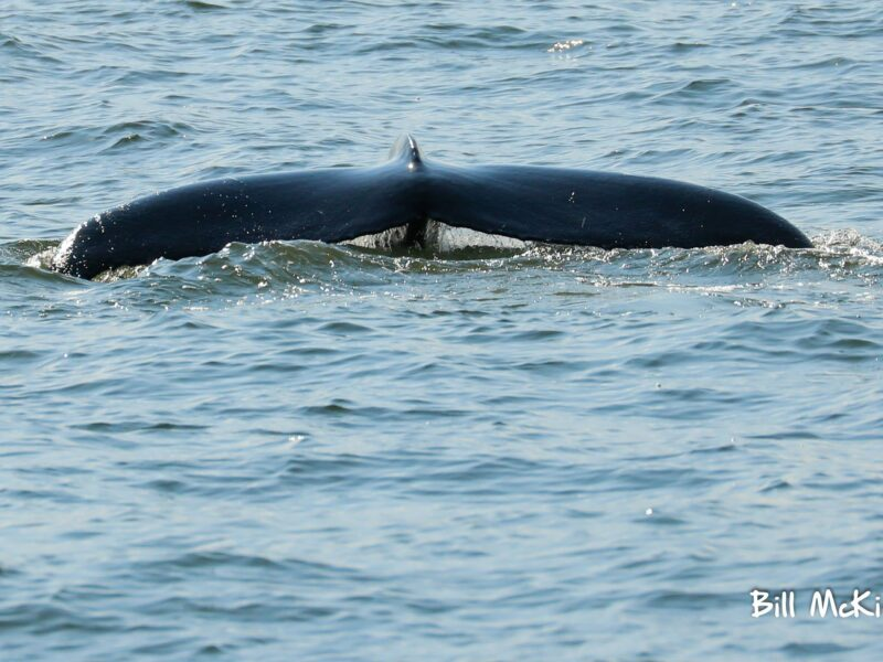 whale watching at the coast of new jersey and new york city