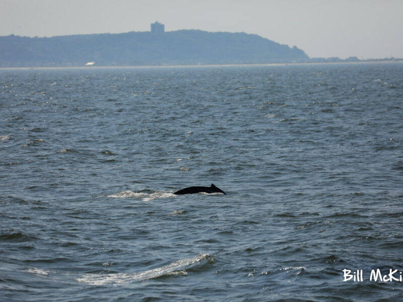 , Whale Watching trip report Sunday July 28th Fantastic!, Jersey Shore Whale Watch Tour 2020 Season