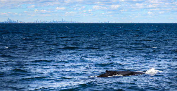 , Meet our on board naturalist Danielle Brown, Jersey Shore Whale Watch Tour 2020 Season