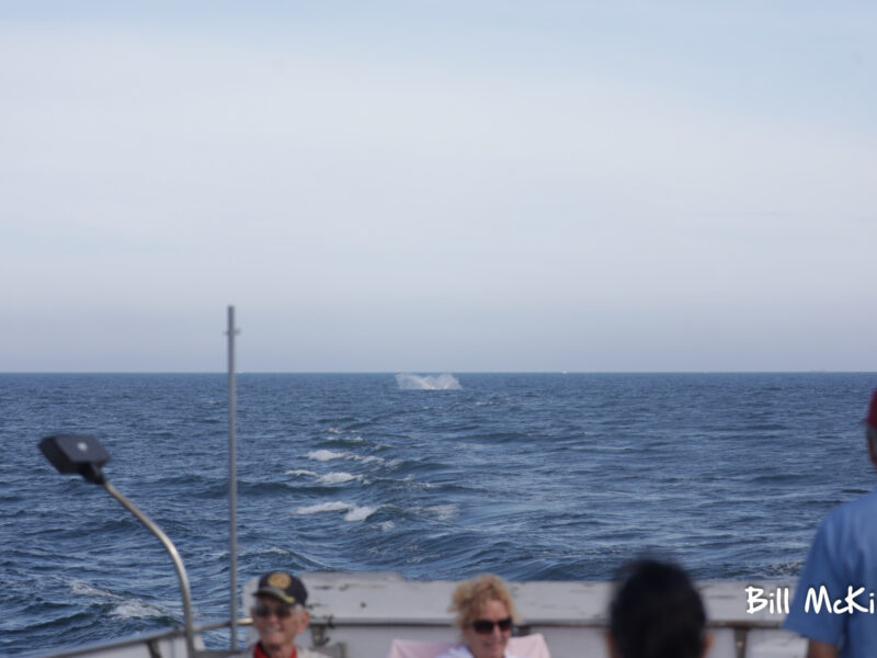 Jersey shore whale watch trip report 2020