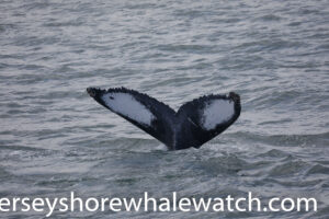 Jersey shore whale watching tour trip review June 2020