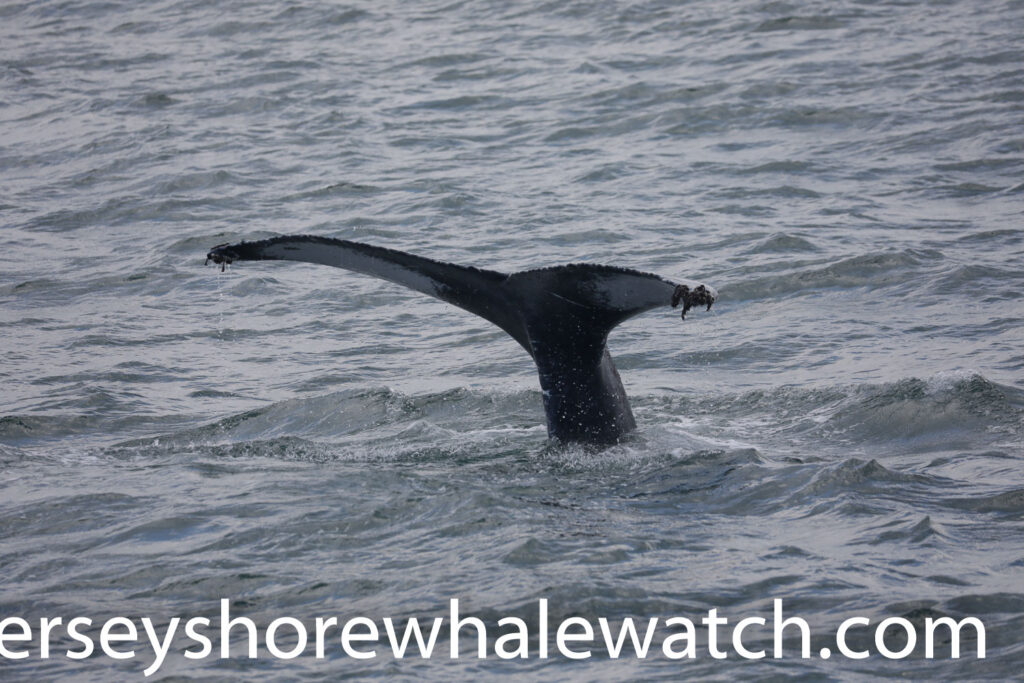 , Whale Watching Trip Report June 28th 2020, Jersey Shore Whale Watch Tour 2021 Season