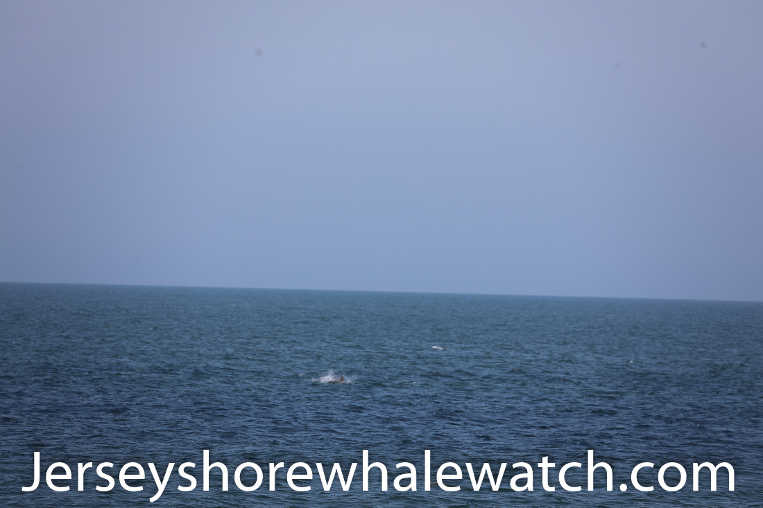 Jersey shore whale watch July 6 review 2020 (1 of 37)