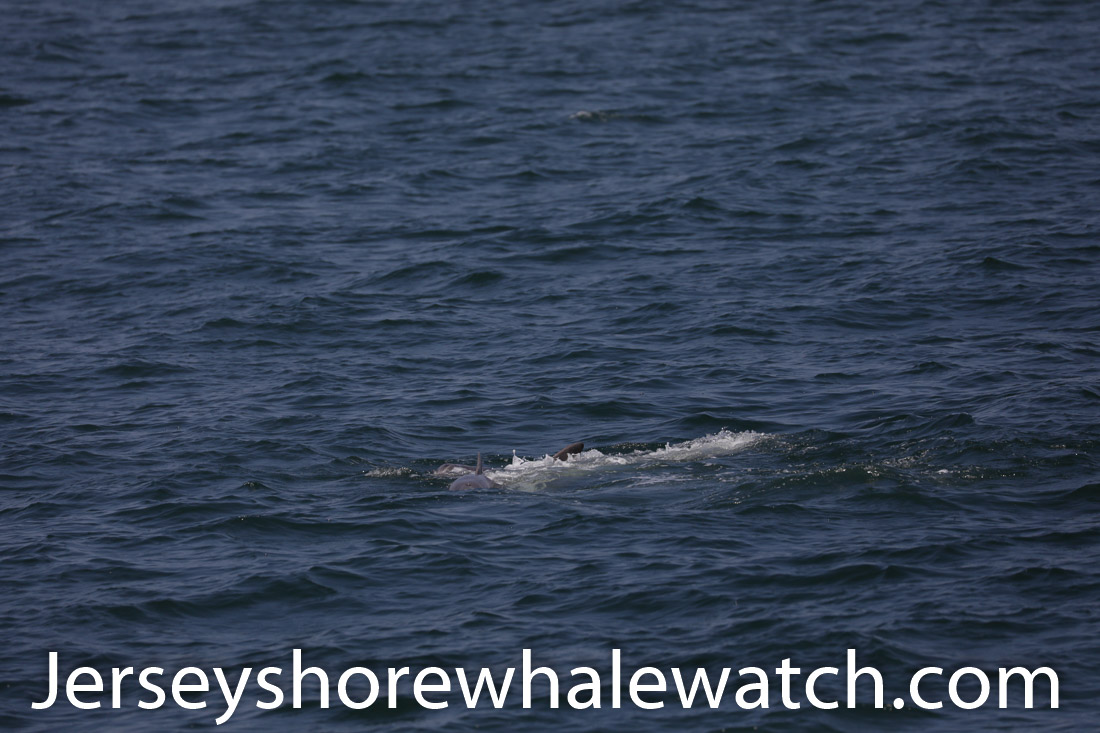 Jersey shore whale watch July 6 review 2020 (10 of 37)