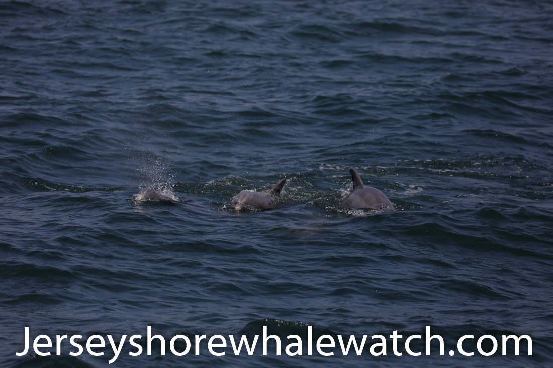 Jersey shore whale watch July 6 review 2020 (12 of 37)