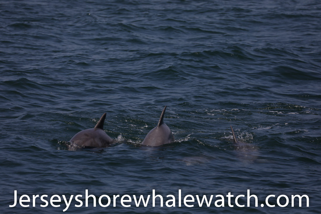 Jersey shore whale watch July 6 review 2020 (13 of 37)