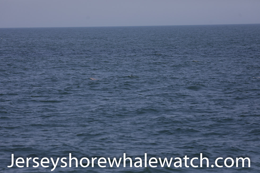 Jersey shore whale watch July 6 review 2020 (15 of 37)