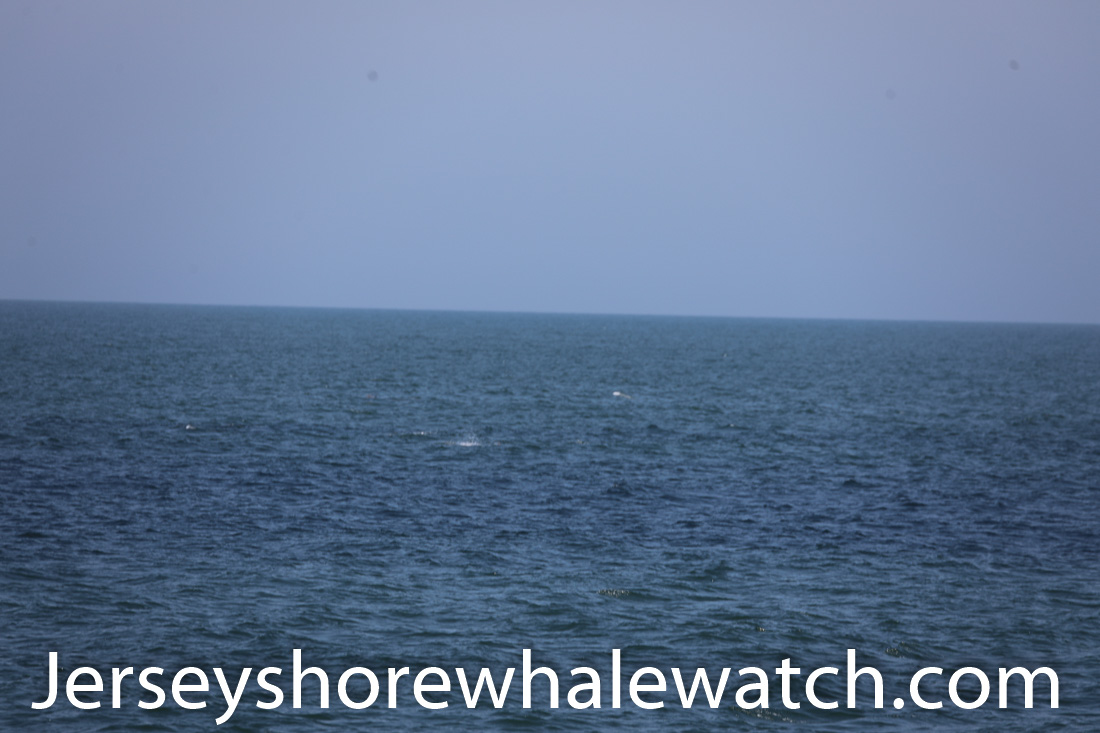 Jersey shore whale watch July 6 review 2020 (2 of 37)