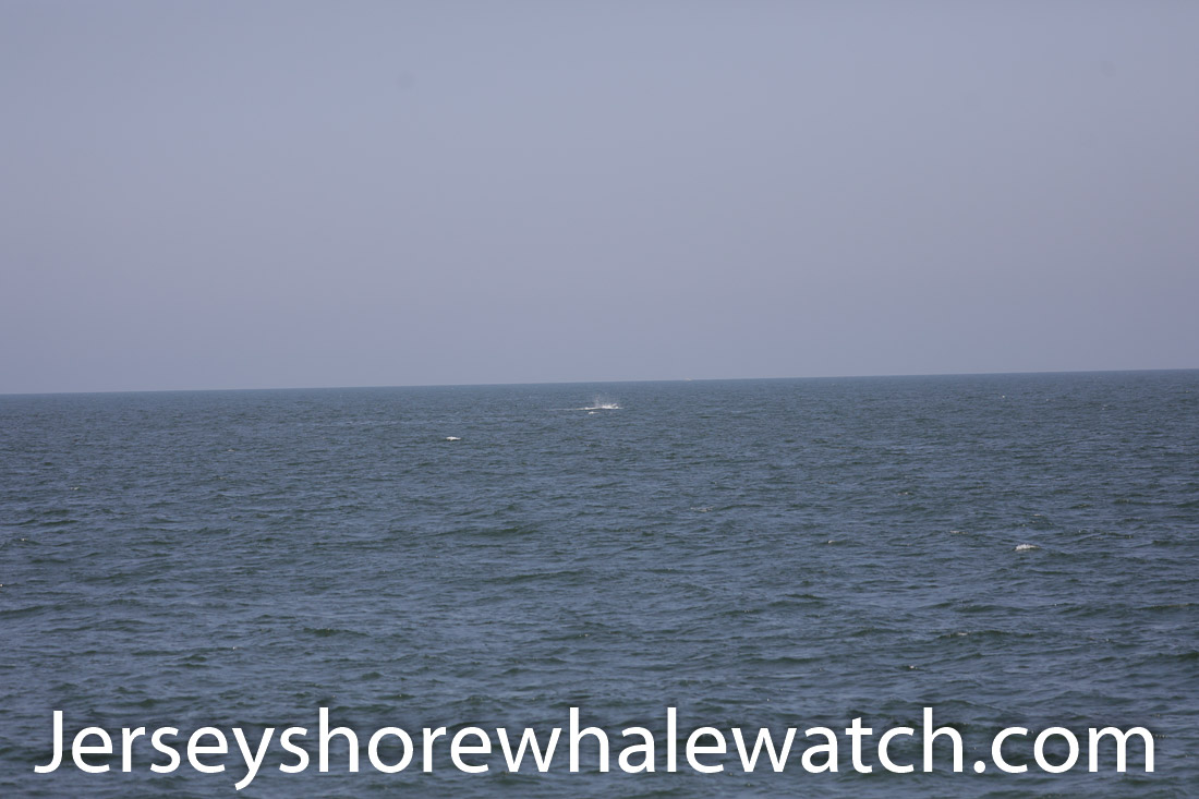 Jersey shore whale watch July 6 review 2020 (22 of 37)