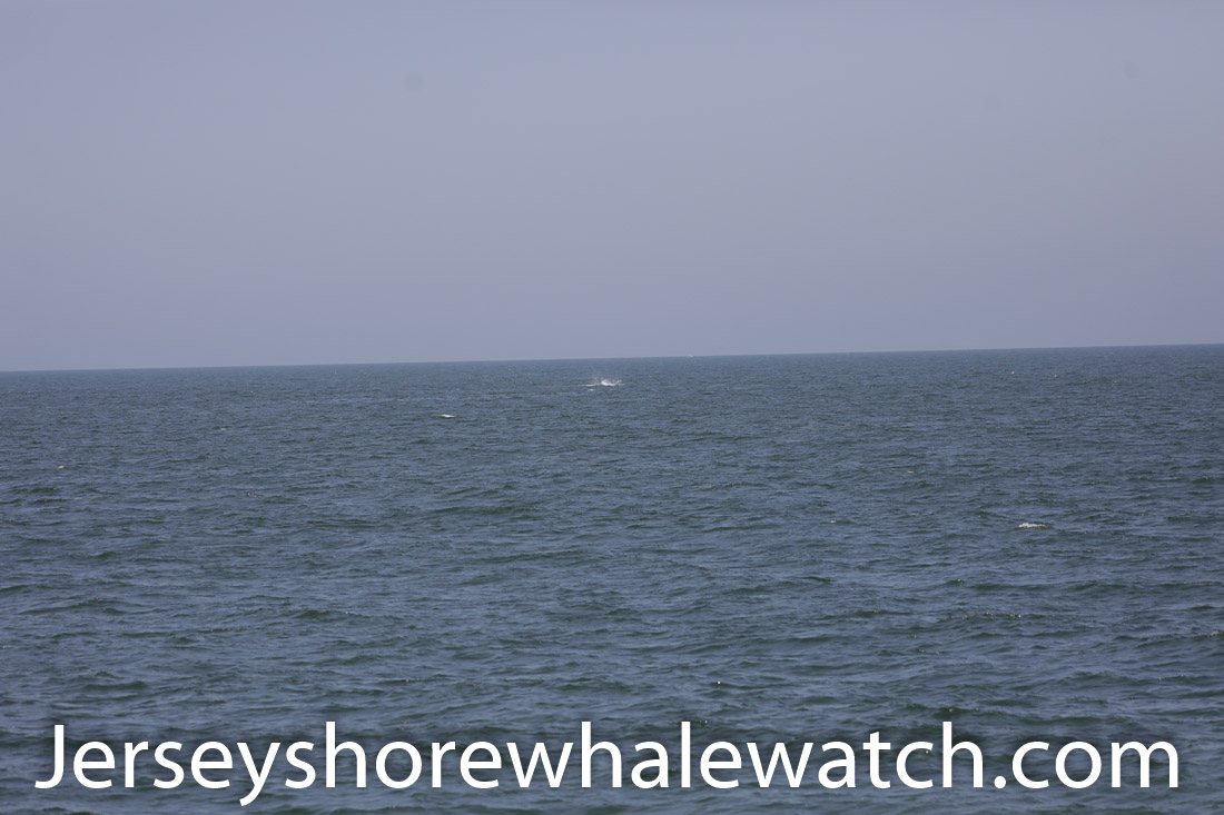 Jersey shore whale watch July 6 review 2020 (23 of 37)