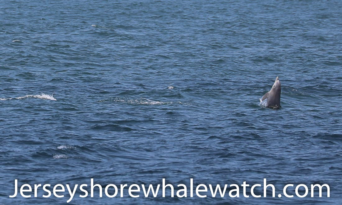 Jersey shore whale watch July 6 review 2020 (3 of 37)