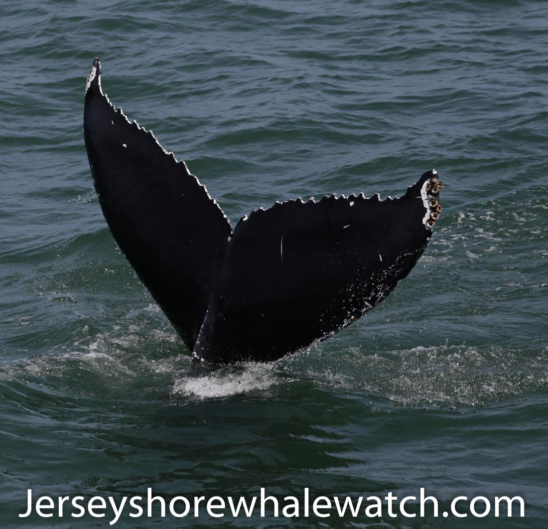 Jersey shore whale watch July 6 review 2020 (37 of 37)