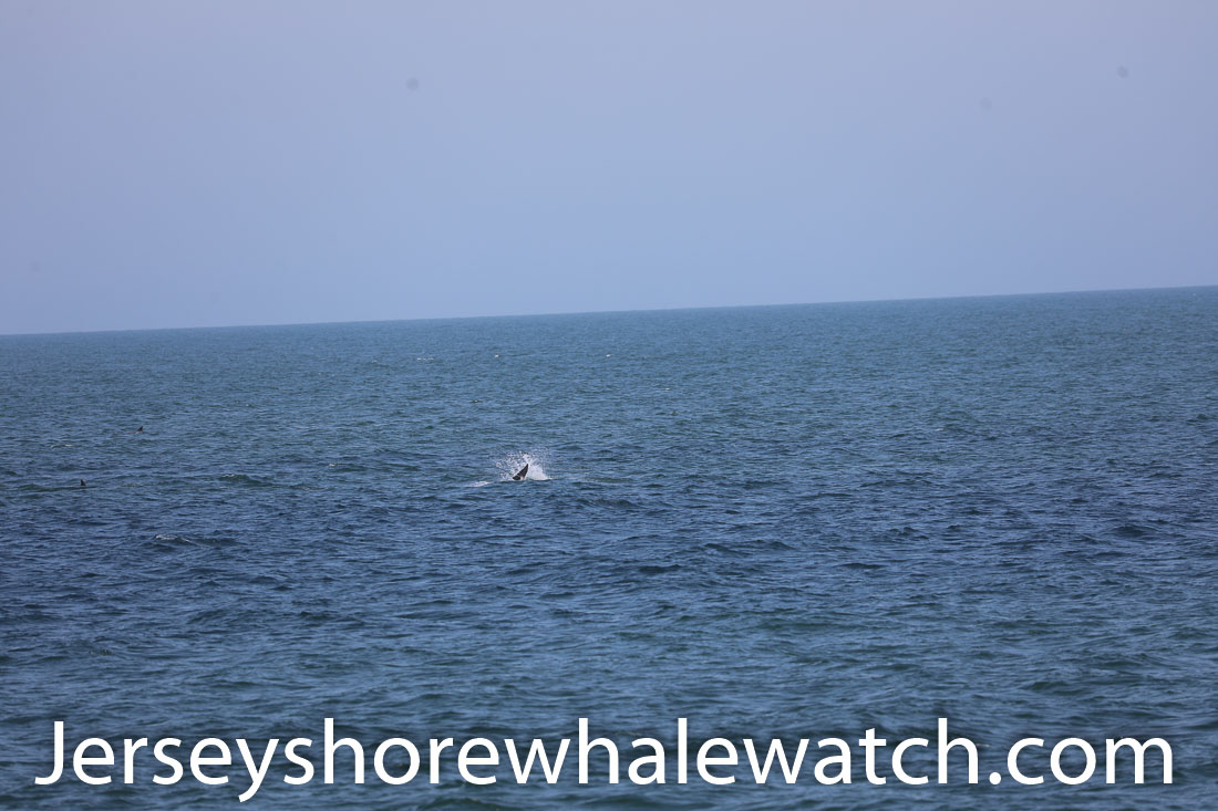 Jersey shore whale watch July 6 review 2020 (7 of 37)