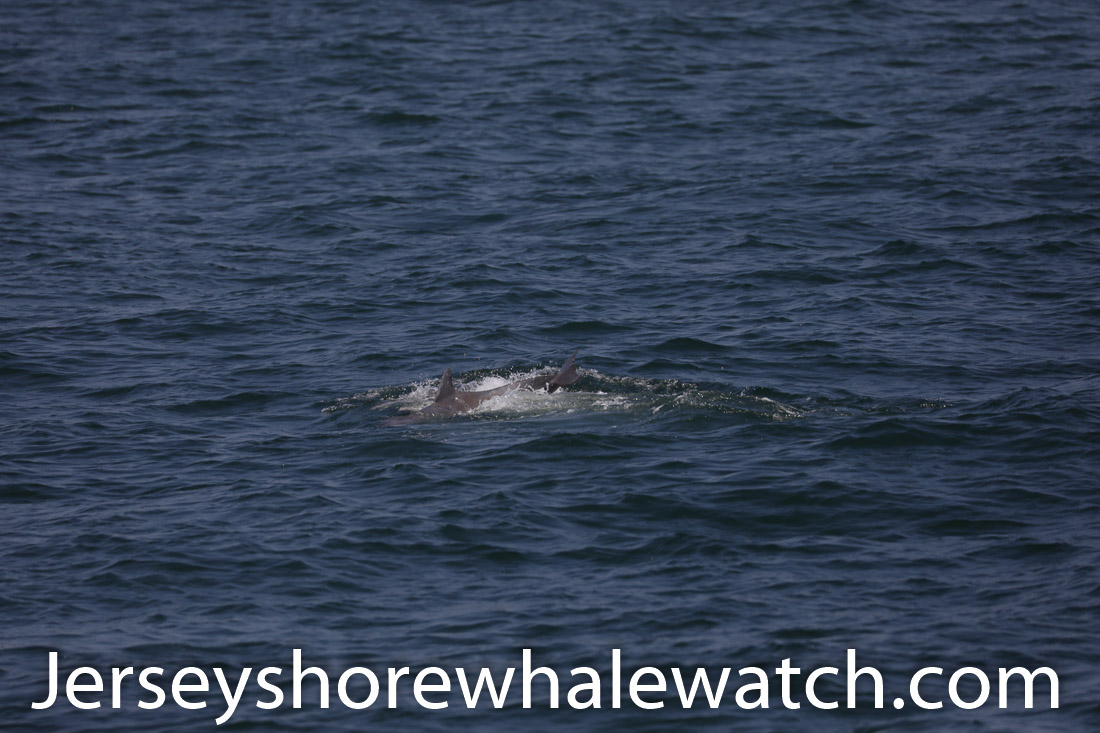 Jersey shore whale watch July 6 review 2020 (8 of 37)