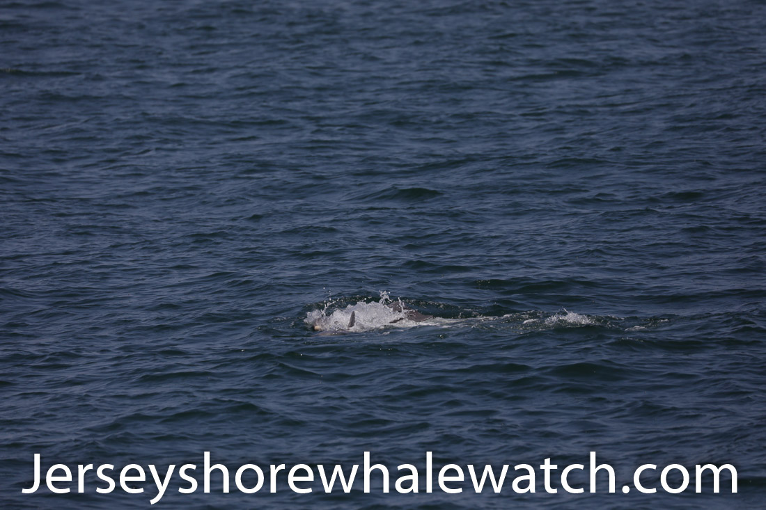Jersey shore whale watch July 6 review 2020 (9 of 37)