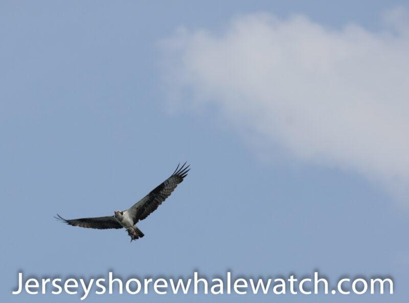 , Belmar Marina report whale watching 7/26, Jersey Shore Whale Watch Tour 2021 Season