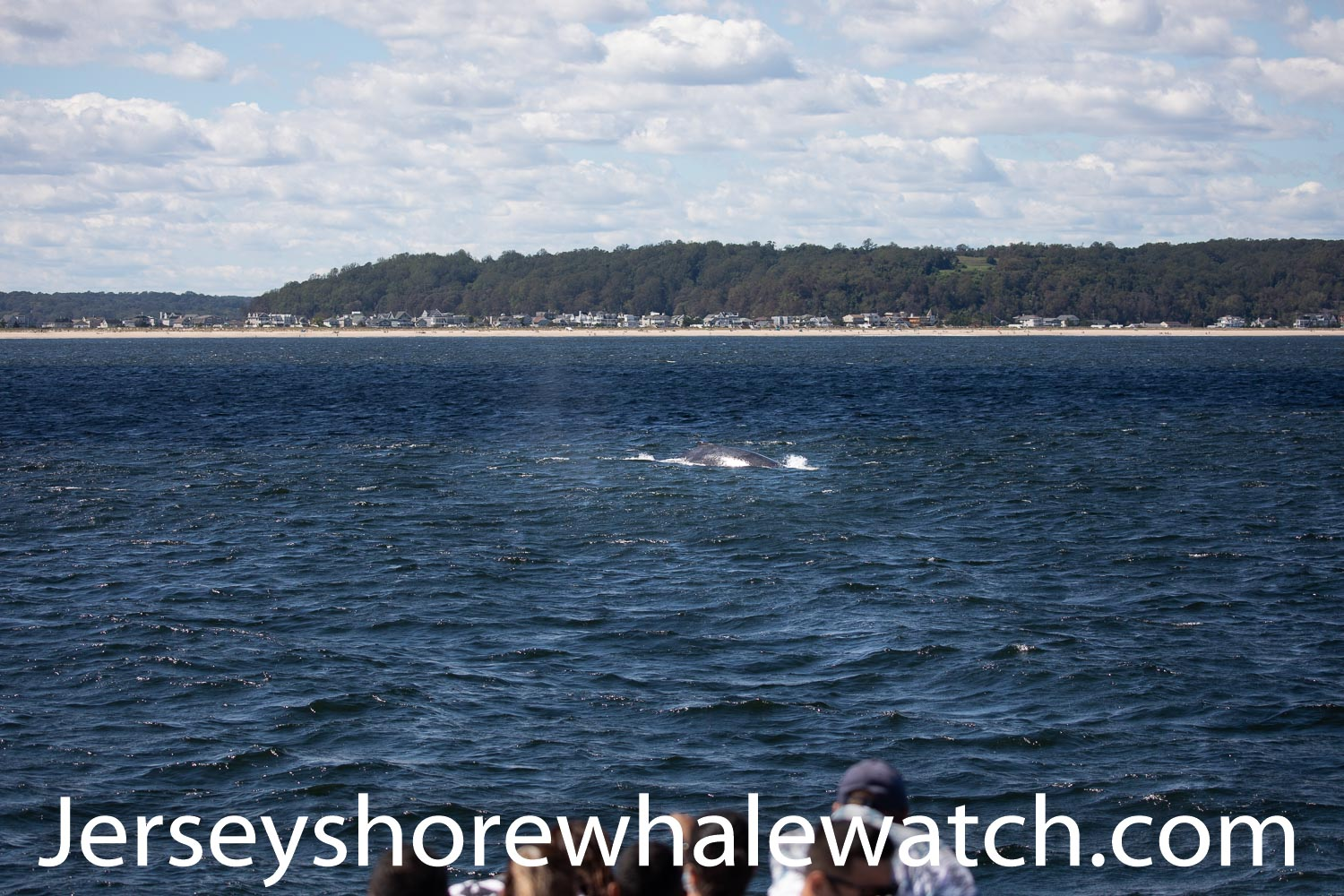 , Sunday August 30th Humpback whale, Jersey Shore Whale Watch Tour 2021 Season