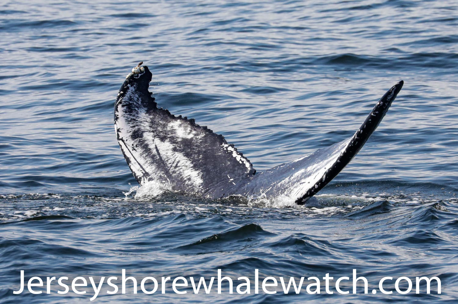 , We guarantee you will see a whale!, Jersey Shore Whale Watch Tour 2021 Season