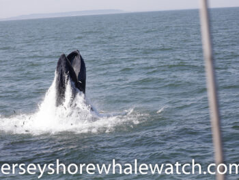 best east coast whale watching trip