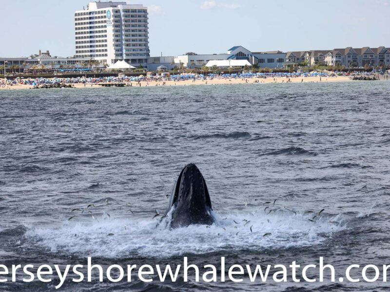 """Canon R5 Whale Watching Jersey Shore whale watch Tour (5 of 1618)"""