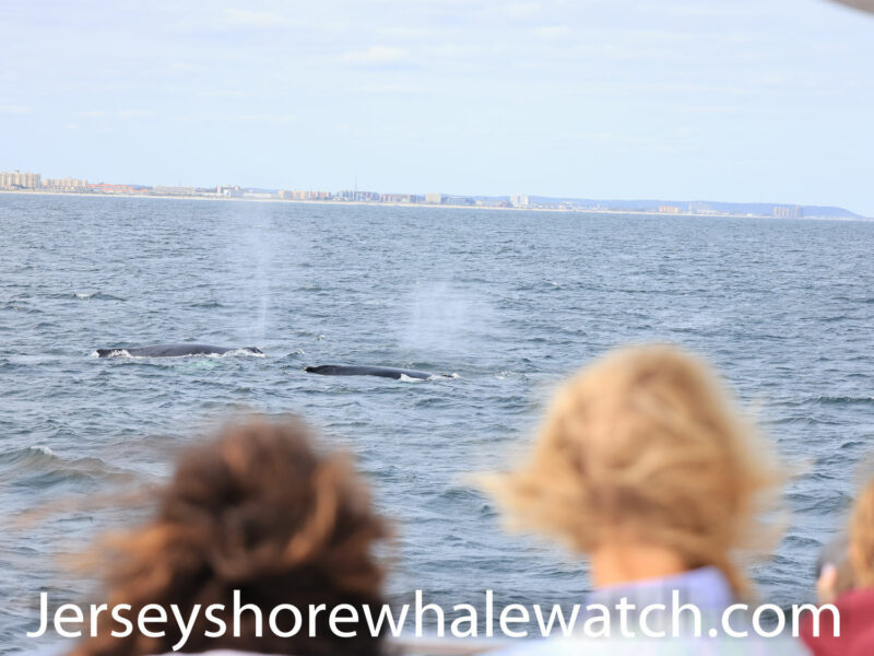 , whale watching trip 4 whales!, Jersey Shore Whale Watch Tour 2020 Season
