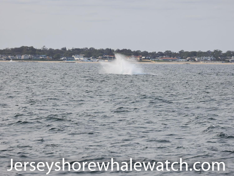 breaching whale 2020 asbury park deal nj