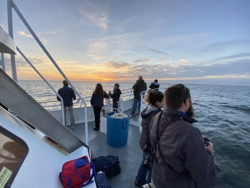 , pelagic birds On our whale watching trips, Jersey Shore Whale Watch Tour 2021 Season