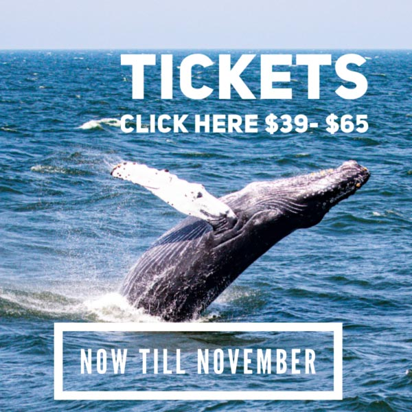 Best whale watching tour in New Jersey