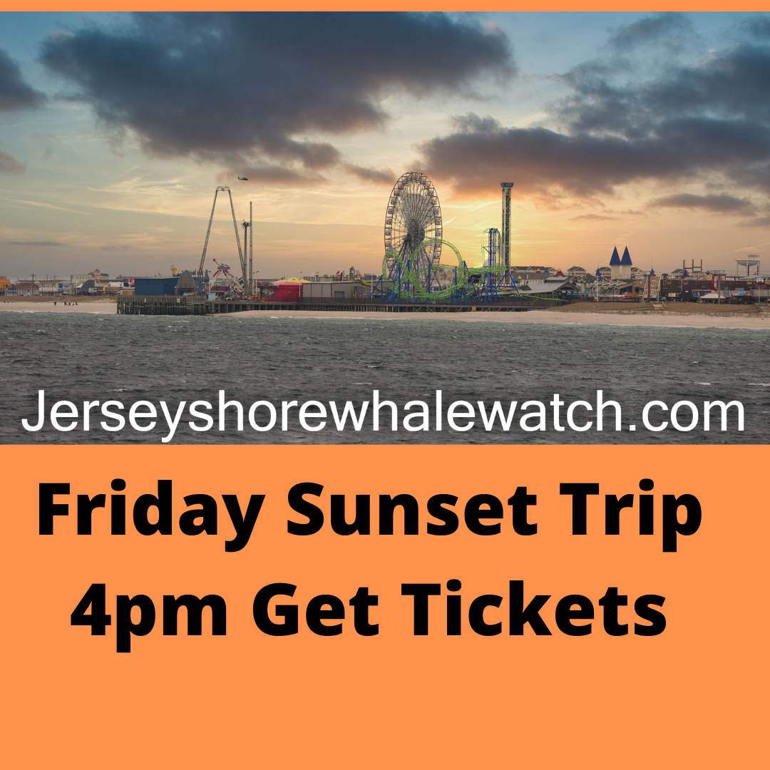 , Friday late afternoon sunset trip whale watching, Jersey Shore Whale Watch Tour 2021 Season